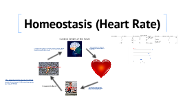 homeostasis of bp and heart rate Blood pressure in your blood vessels is closely monitored by baroreceptors they  send messages to the cardio regulatory center of your medulla.