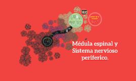 Medula espinal y Sistema nervioso periferico.
