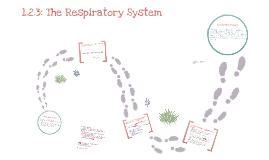 Edexcel GCSE PE Respiratory System