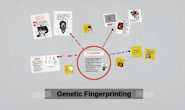Copy of Genetic Fingerprinting