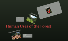 Human Uses of the Forest