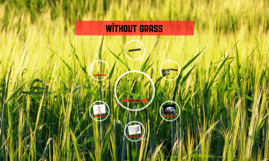 Without grass