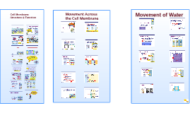 Cell Membrane Structure & Function