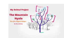Copy of Mountain Nyala