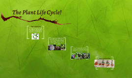 The Plant Lifecycle!