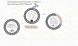Using Restriction Enzymes to Make a Recombinant DNA Plasmid