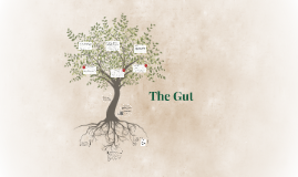 Copy of The Gut