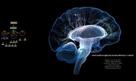 Anatomofisiología del SNC-Neurotrasmisores