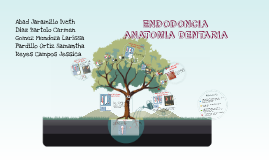 Copy of       ENDODONCIA