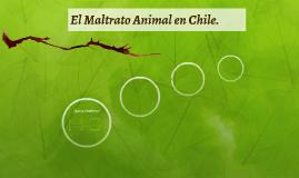 El Maltrato animal en Chile.