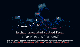 Eschar-associated Spotted Fever Rickettsiosis, Bahia, Brazil