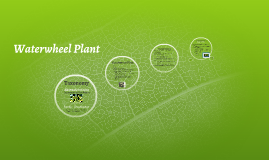 Copy of Waterwheel Plant