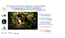 DESCRIPCION ANATOMICA DEL PLEXO BRAQUIAL DEL VENADO COLIBLAN