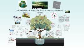 Copy of PROGRAMA DE ADECUACION Y MANEJO AMBIENTAL (PAMA)