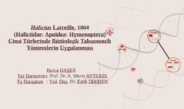 Halictus Latreille, 1804