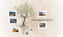 Deforestation fire
