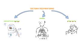 Copy of Copy of SISTEMA RESPIRATORIO