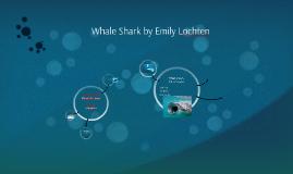Whale Shark by Emily Lochten