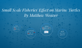 Copy of Small Scale Fisheries' Effect on Marine Turtles