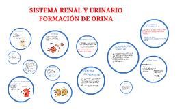 SISTEMA RENAL Y URINARIO