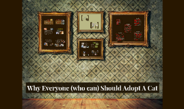 Why Everyone Should Adopt A Cat