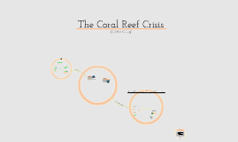 The Coral Reef Crisis