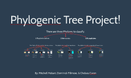 Phylogenic tree project
