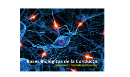 Copy of Copy of Neuronas y la glia