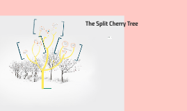 The split cherry tree