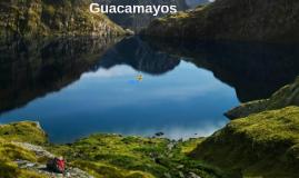 Los guacamayos