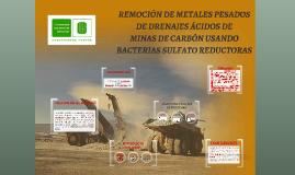 REMOCIÓN DE METALES PESADOS DE DRENAJES ÁCIDOS DE MINAS DE CARBÓN USANDO BACTERIAS SULFATO REDUCTORAS