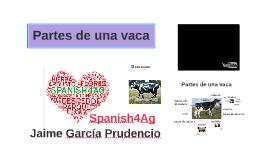 Cow anatomy. Spanish4ag