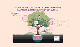 Copy of EFECTOS DE LAS LONGITUDES DE ONDA EN PHALARIS CANARIENSIS, L