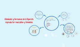 Copy of glandulas y Hormonas en el Aparato reproductor masculino y f