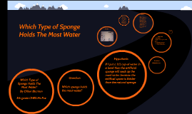 which sponge holds the most water