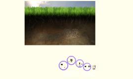Copy of Soil's Soul
