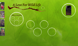 A Love For Wild Life