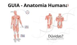 Cópia de Design - Anatomia Humana