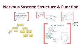 BI 4: Nervous System