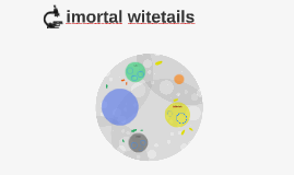imortal witetails