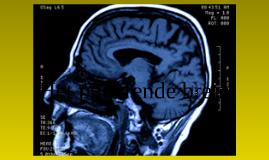 Copy of Het puberende brein