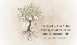 Copy of Copy of Effects of pH on Active Transport of Chloride ions in Turnip