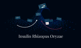 Copy of Insulin Rhizopus Oryzae