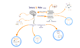 Motor & Sensory Function