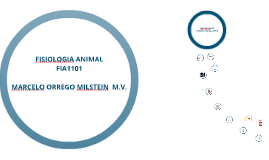 FISIOLOGIA ANIMAL FIA1101 SISTEMA CIRCULATORIO