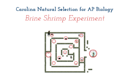 Copy of Brine Shrimp Experiment
