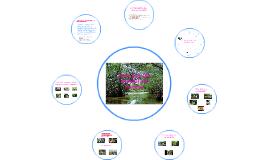 26 de julio dia mundial de l manglar