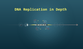 DNA Replication in Depth