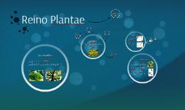 Copy of Reino Plantae