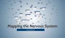 Copy of Mapping the Nervous System